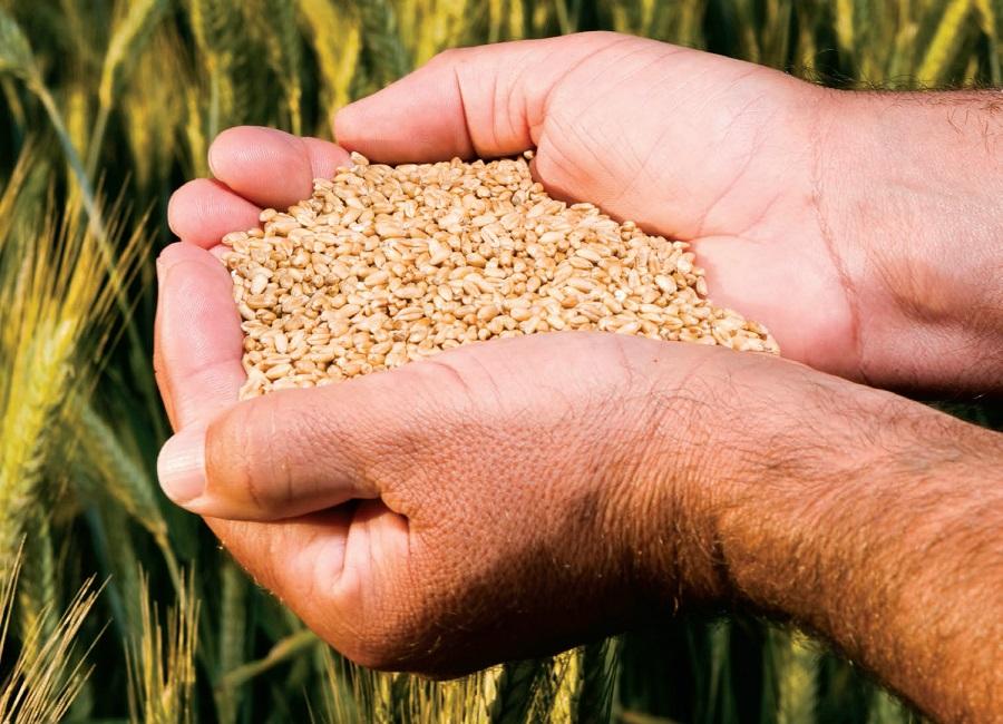 Growing demand for food good news for SA