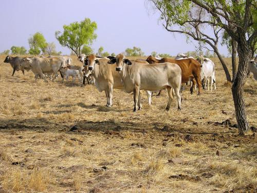 S. Kidman and Co cattle empire receives all Australian bid