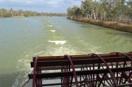 Murray River flows predicted to reach their highest levels since 1993