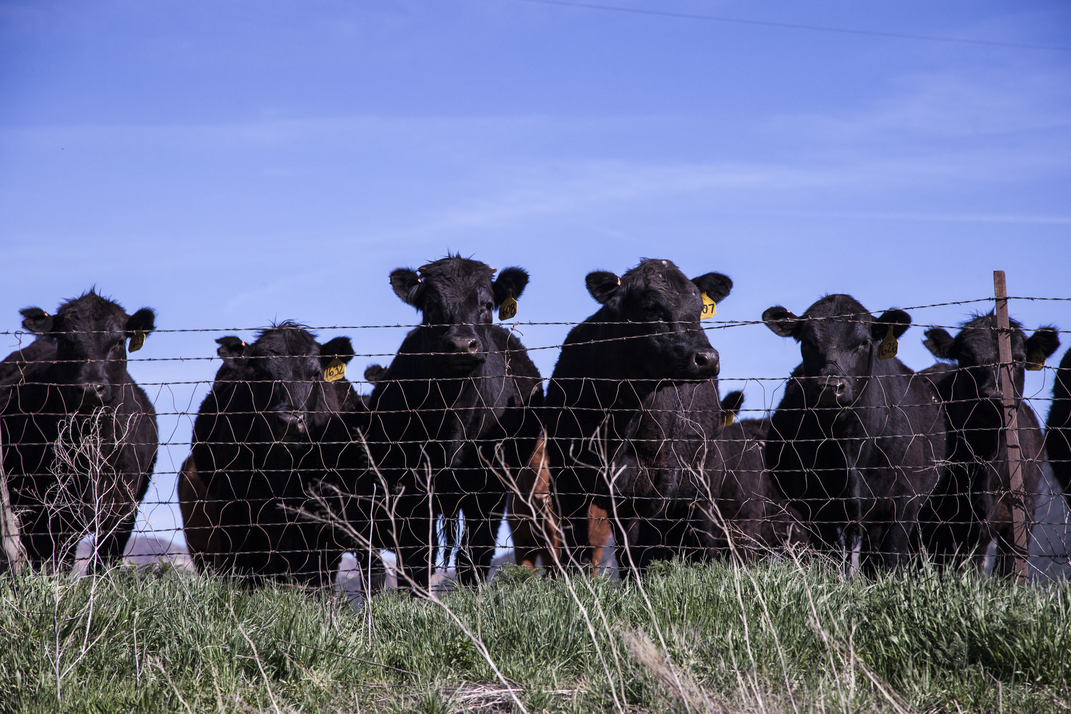 Breaking: Chinese ban on Aussie beef lifted